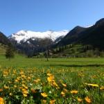Schnee auf den Bergen,Blumen im Tal